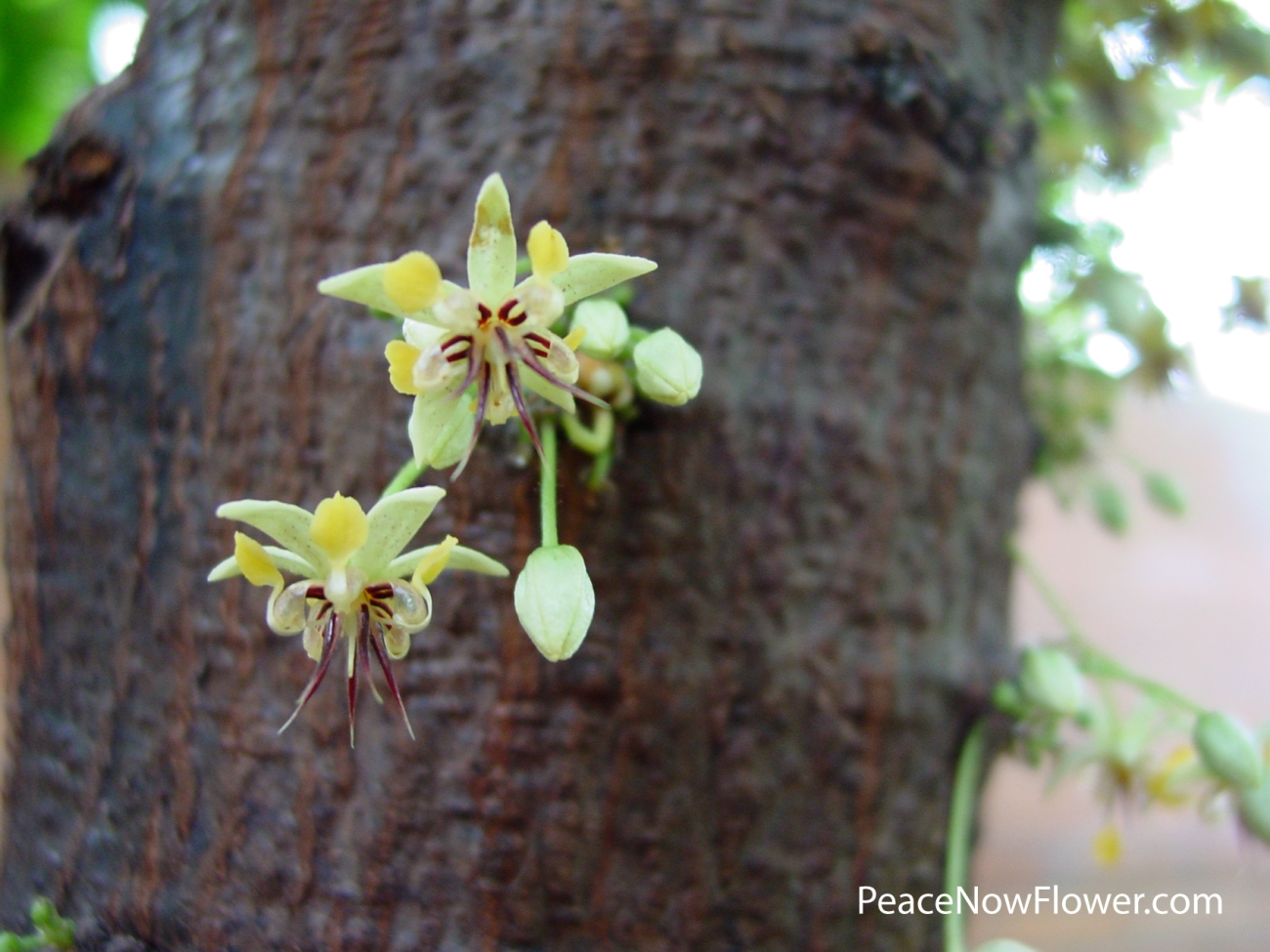 flower_from_tree