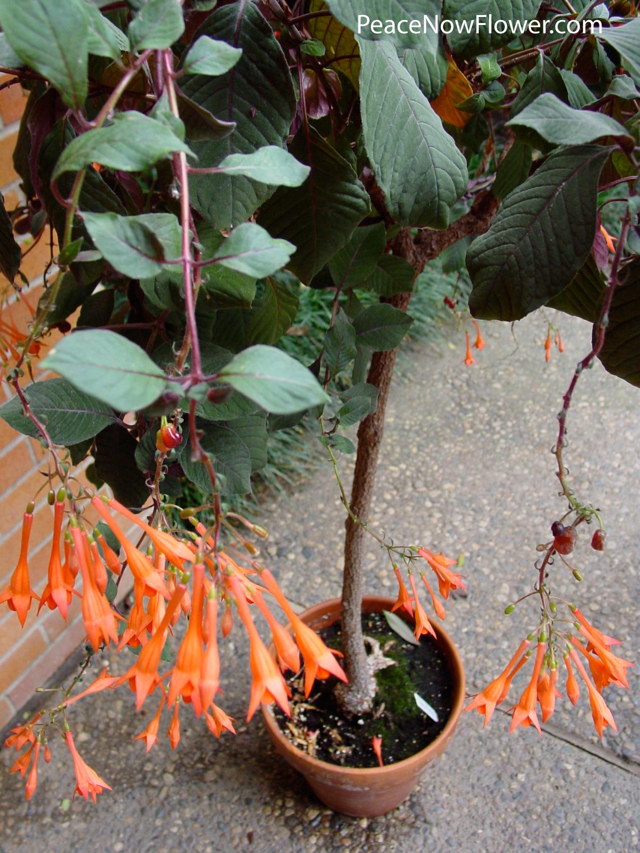 sm_tree_flowering